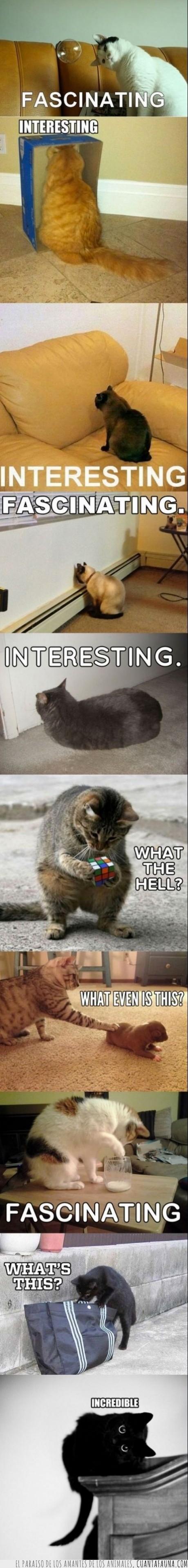 burbuja de jabon,cachorro,caja,curiosidad,curioso,fascinante,gato,interesante,pared,tiernos