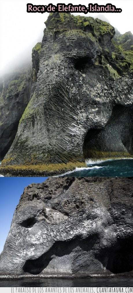elefante,islandia,naturaleza,roca