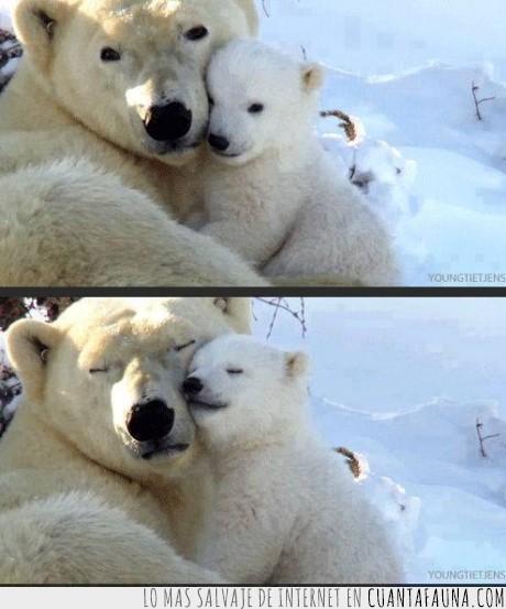 amor,bebe,lindo,mama,osito,oso,oso polar,tierno