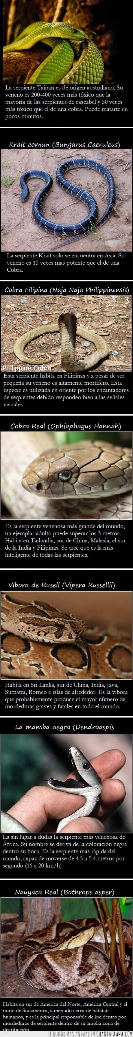 Cobra,Krait,Mamba,Nauyaca,Rusell,Serpientes,Taipan
