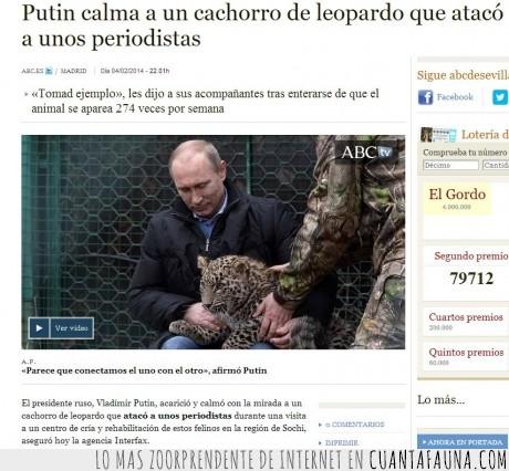 a hacerlo más de 274 veces por semana,leopardo,mejor no meterse con él,miedo,mirada,Putin,Vladimir Putin