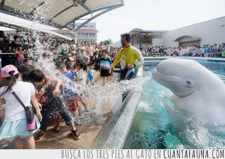 agua,Ataque hidrochorro,chorro,delfín,lanzar,parque acuatico