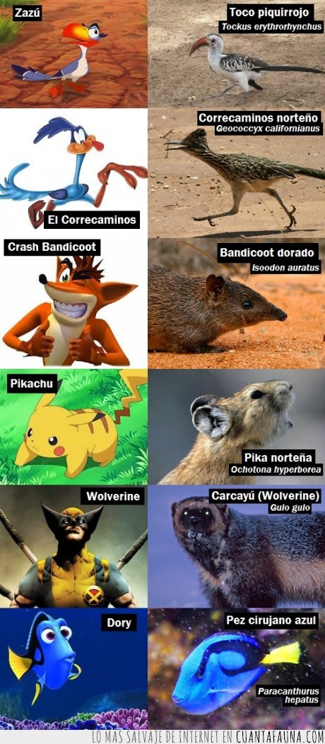 Animales,ave,dibujos animados,mamifero,pez,pika,wolverine no es un lobezno