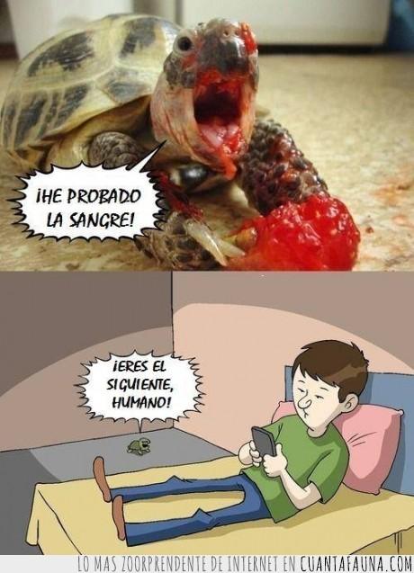 fresa,humano ingenuo,sangre,tortuga