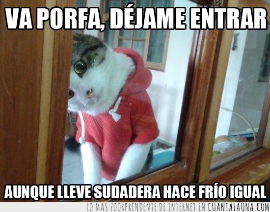entrar,frio,jersey,rojo,sudadera,ventana