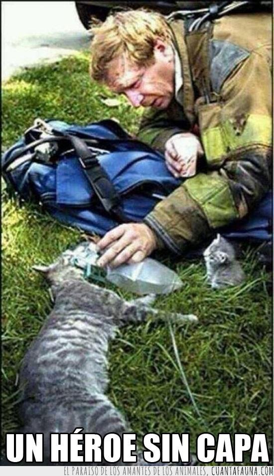 bombero,buena persona,cachorro,gata,gatito,heroe,heroe sin capa,mamá,salvar,vida
