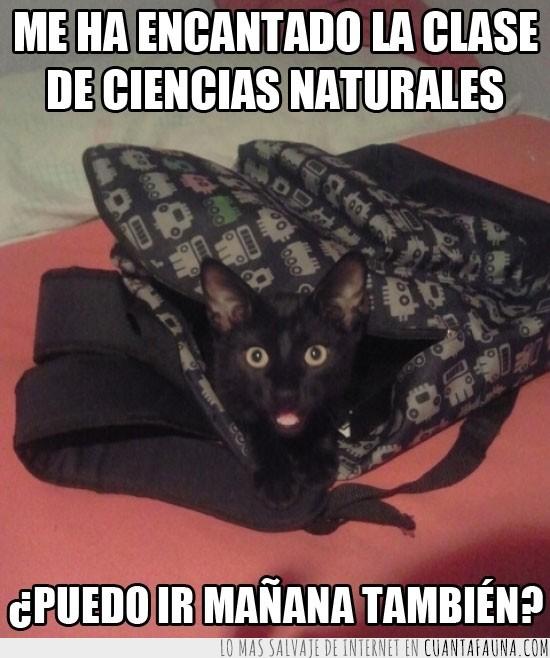 batman,casa,ciencias naturales,gato,mañana,mochila