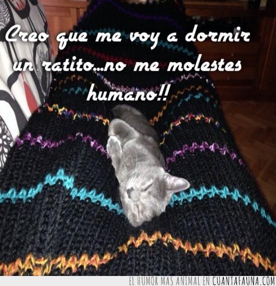 encima,gato,manta,piernas,sofa,tumbado