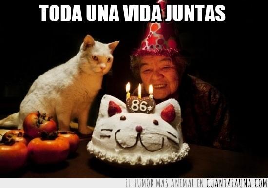 86,anciana,años,blanco,celebrar,cumpleaños,dueña,Gata,gato,tarta,vida