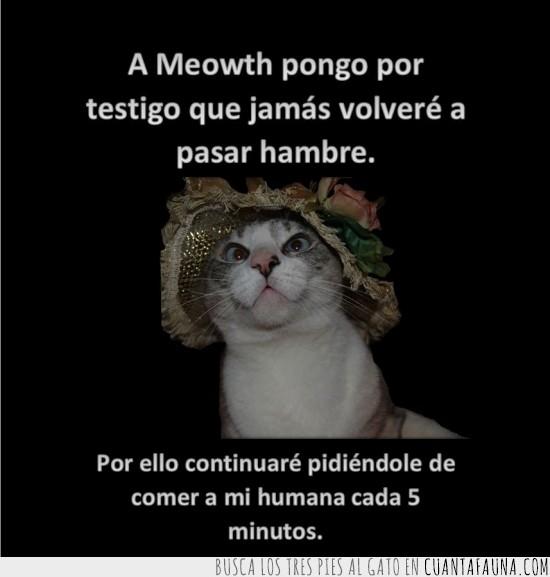 cat version,gatos,lo que el viento se llevo,meowth,testigo