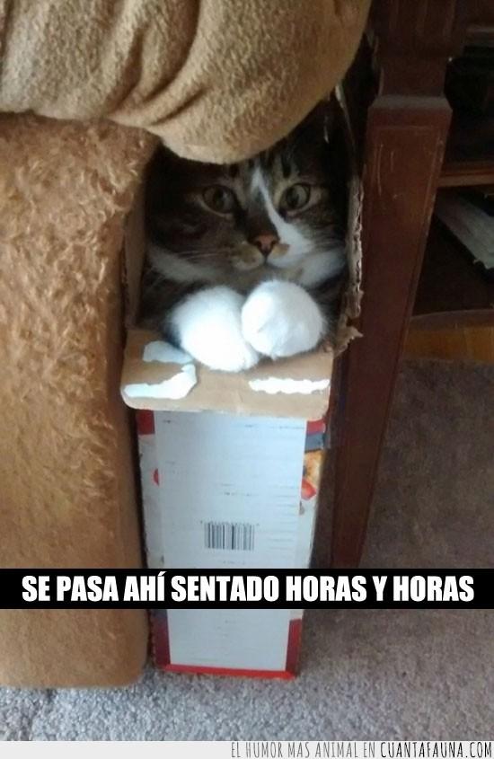 caja,dentro,escondido,gato,se siente segurooooo,vago