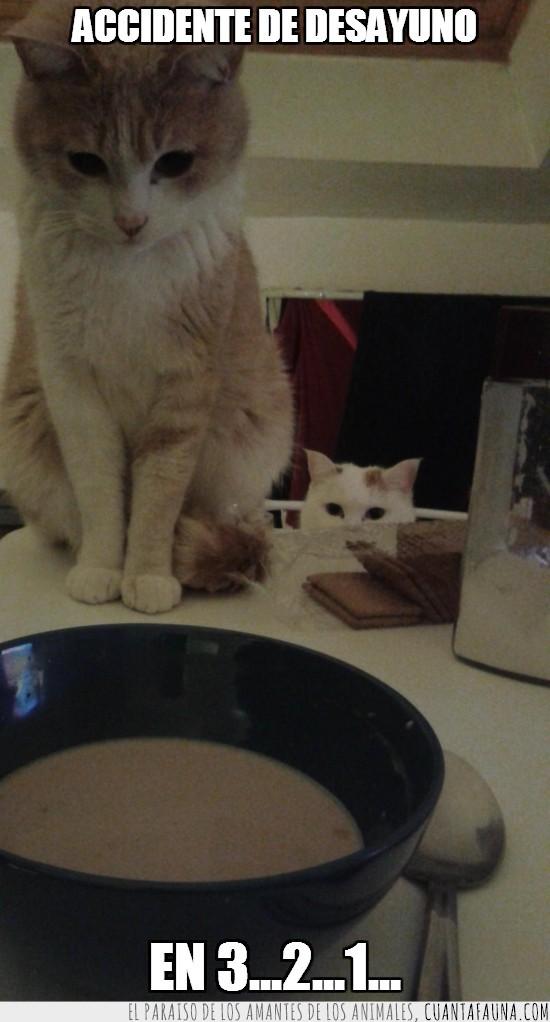 accidente,bol,desayuno,galletas,gata blanca,gato naranja,leche