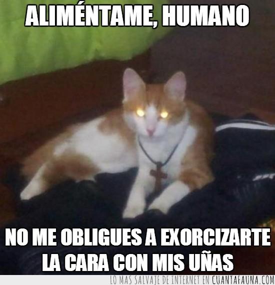 cosme,cruz,demonio,el exorcista,gato poseido,mi gato