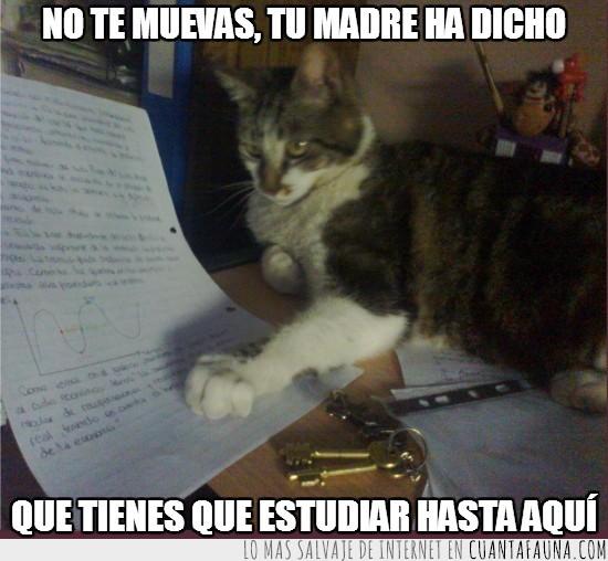 estudiar,gatito,papel,tareas