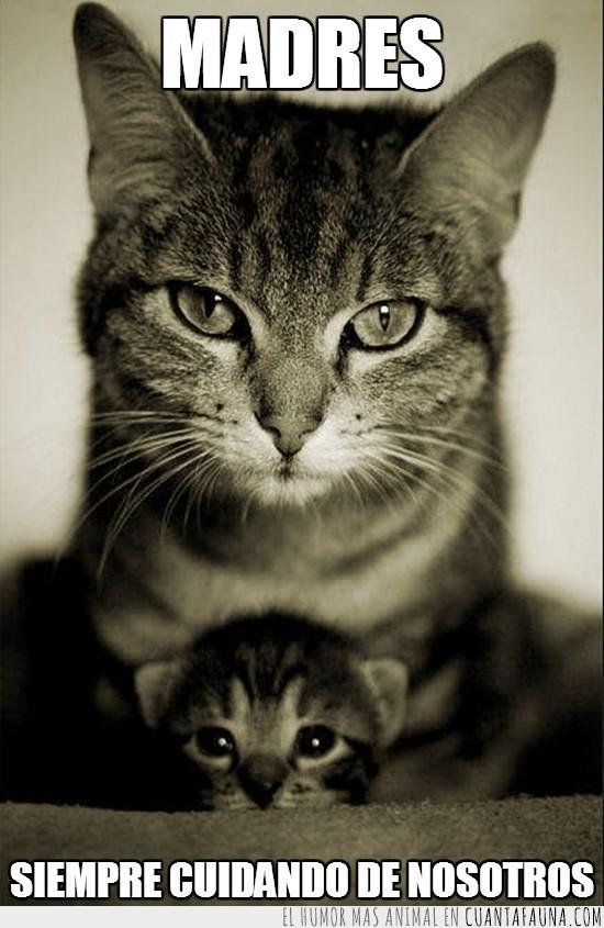 cría,cuidar,gatito,Gatos,madre,proteger
