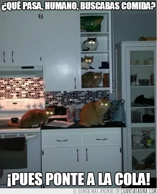 armario,comida,gatos,ojos brillantes,susto