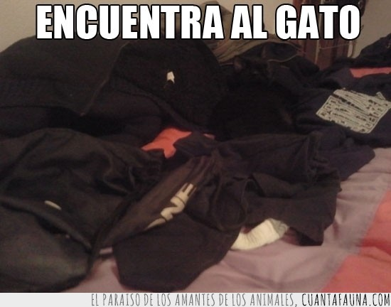 Batman,dormir,negro,ropa,ropa negra,tumbado