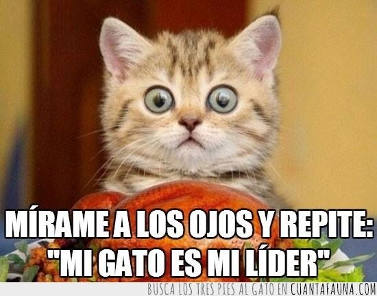 gato amo,hipnosis,hipnotizar,líder,mirar a los ojos