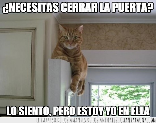 acostado,cerrar,gato,puerta,tumbado