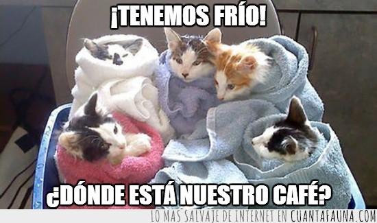 café,caliente,frío,gato,toallas