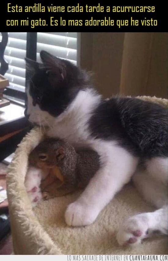 abrazar,acurrucar,amigos,ardilla,gato