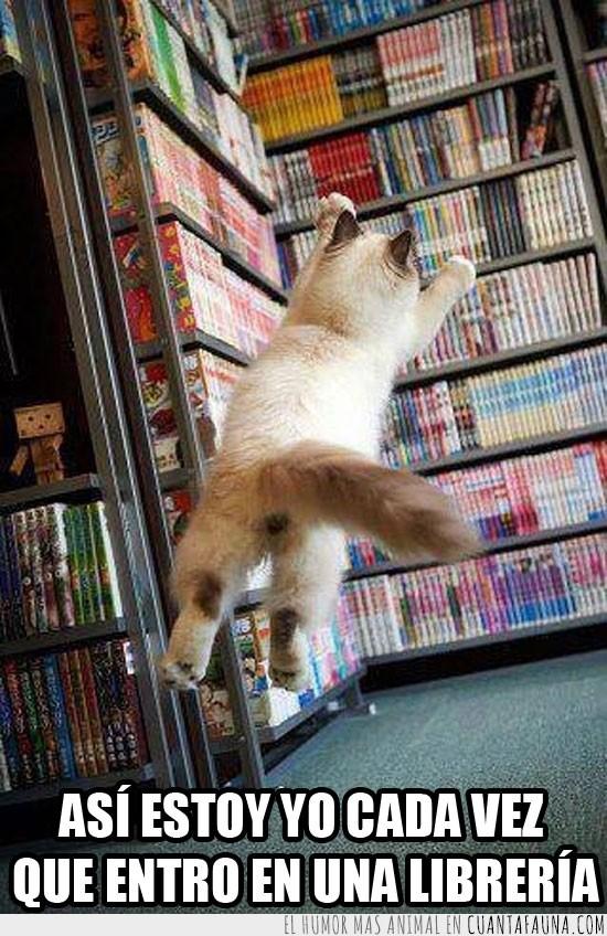 emoción,gato,librería,libros,salto,volar