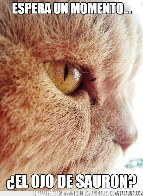 el señor de los anillos,forma,gato,ojo,rufus,sauron