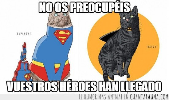 batcat,dibujo,gatos,héroes,supercat,superheroes