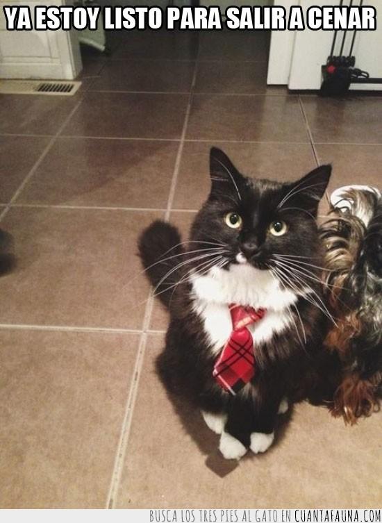 cenar,corbata,gala,Gato,listo,restaurante,salir
