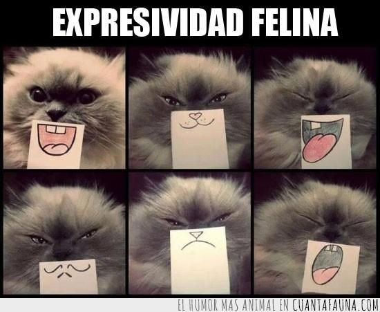 caras,expresiones,gato,gracioso,sonrisas