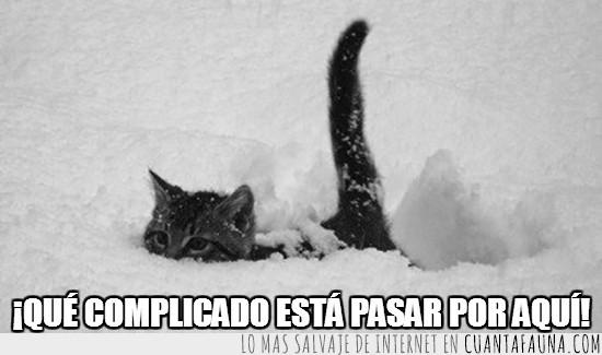 caminar,complicación,gato,hundido,nieve