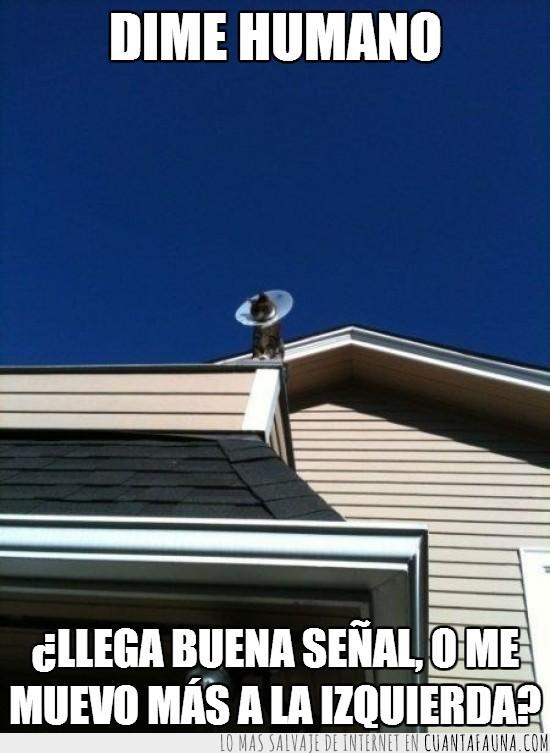 casa,collar,gato,lampara,moverse,señal,techo