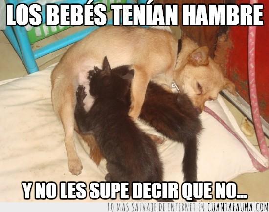 adoptiva,madraza,madre,mamar,maternal,perra
