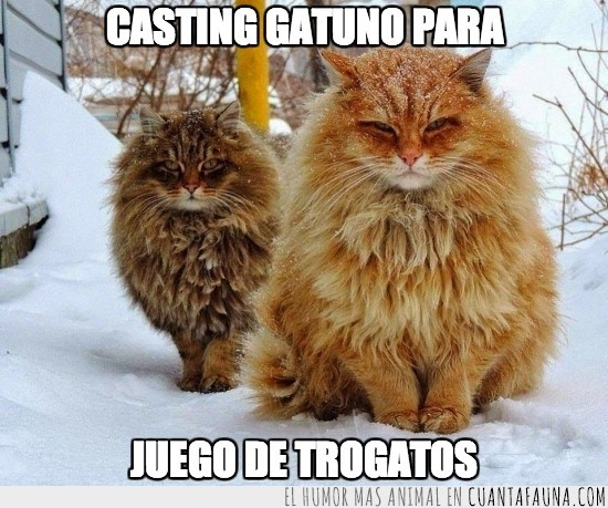 gatos,juego de tronos,nieve