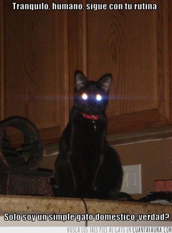gato,hipnosis,hipnotico,luces,nada,normal