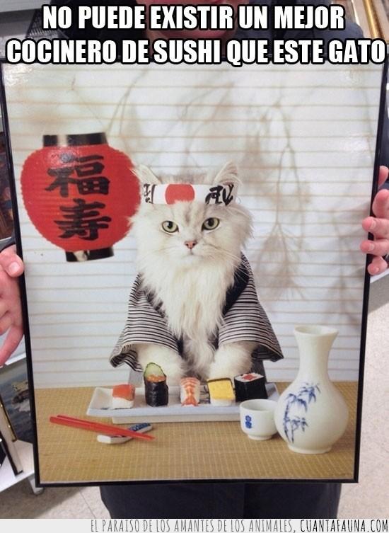 cocinero,gato,japones,sake,sushi
