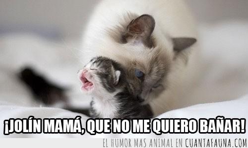 amor,bebé,cachorro,cuidados,gatito,Gato,llorar,madre,ternura