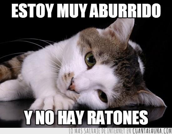 aburrido,gatete,gato,no hay ratones