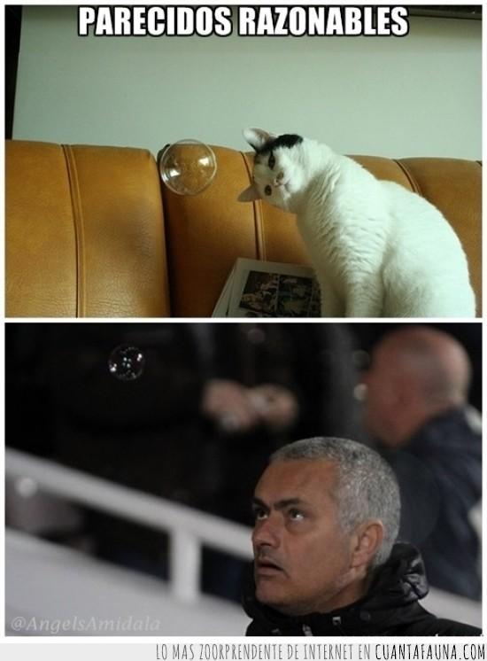 burbuja,comparación,gato,mourinho,parecido