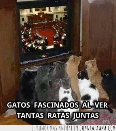 atentos,Gatos,gobierno,ratas,tele