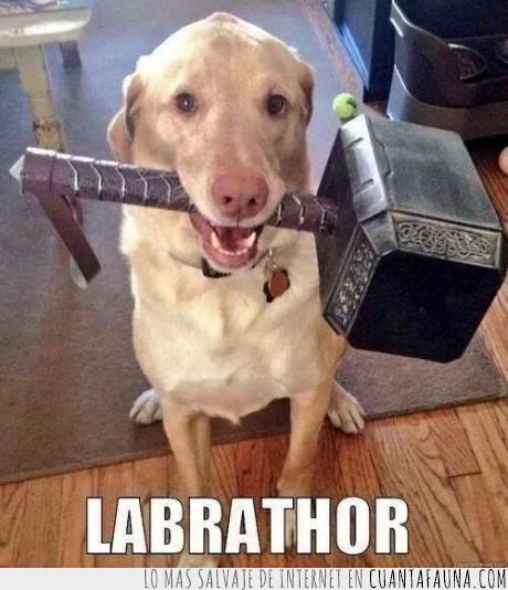 asgard,avengers,labrathor,martillo,perro,thor