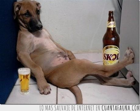 beber,cerveza,dolor,nada,perro,resaca,¿que haces?
