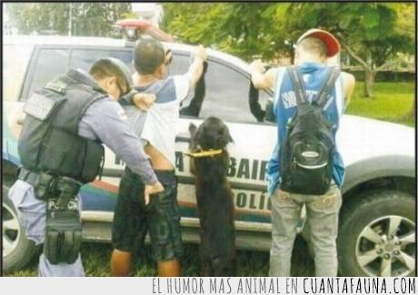 buscar,cacheo,compañía,patrulla,perro,policía