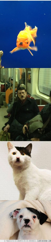 bigote,cara,gato,hitler,misma,perro,persona,pez,reencarnacion,renacer