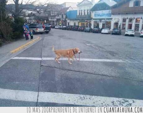 autosuficiente,correa,pasear,perro,solo,tirar