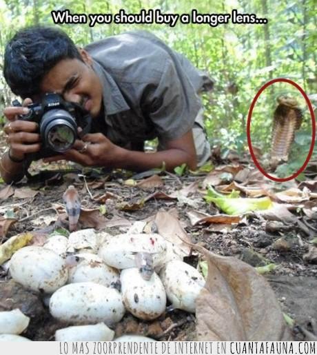 crias,fotografia,fotografo,huevos,serpiente