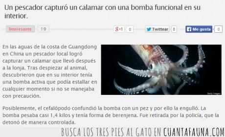 bomba nuclear,calamar,eeuu piensa intervenir el mar,el pescador tenía conocimientos de bombas nucleares porque la reconoció,etiquetas,guerra nuclear impulsada por los calamares,japón,johnny deep,kraken,mar,oceano,pescador,piratas del caribe