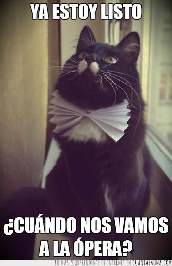 arreglado,elegante,gato,listo,opera