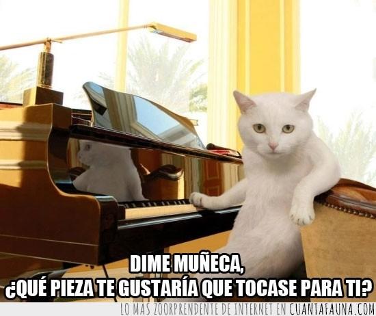 gatito,musica,pianista,piano,pieza,tocar