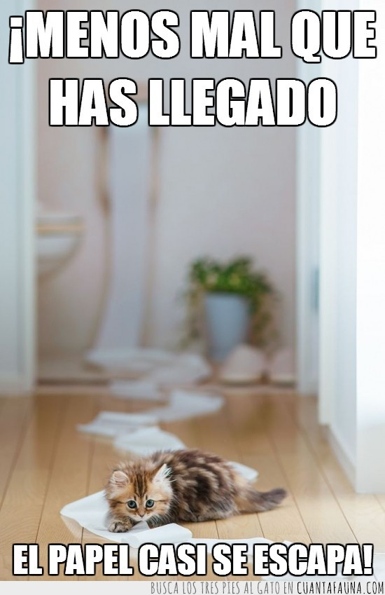 escapar,higienico,lavabo,papel del vater